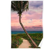Beautiful palm on a tropic beach. Poster