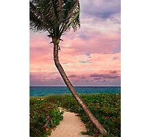 Beautiful palm on a tropic beach. Photographic Print