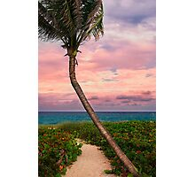 Beautiful palm on a tropic beach. Photographic Print