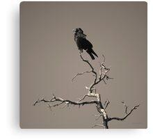 Raven III Toned Canvas Print