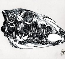 Anatomical study of a horses skull by AderynValentine