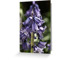 Bluebell Happiness Greeting Card