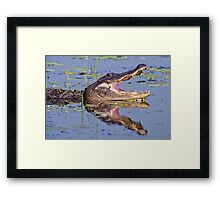 Lacassine Laughter Framed Print