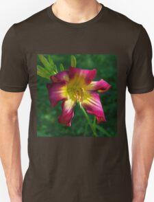 Raspberry and gold daylily flower - Hemerocallis 'Liberty Banner' Unisex T-Shirt
