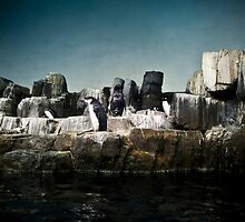 Penguins by ScaredylionFoto