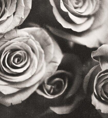Medium format analog black and white photo of white rose flowers Sticker