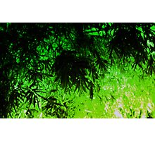 Green Medley Photographic Print