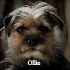 OLLIE MY BEAUTIFUL BORDER TERRIER DOG  by leonie7