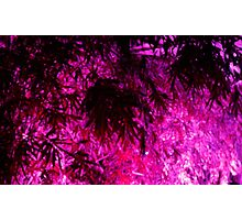 Purple Medley Photographic Print