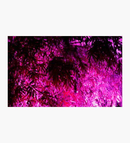 Purple Medley Photographic Print