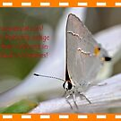 Banner AGC Butterfly Feature by aprilann