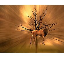 Golden Stag Photographic Print