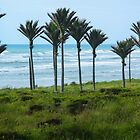 Nikau Palm Grove - West Coast NZ by Kathy Reid