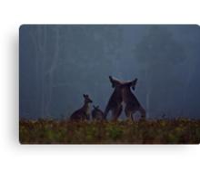 Boxing Kangaroos in farmland near Maclean Canvas Print