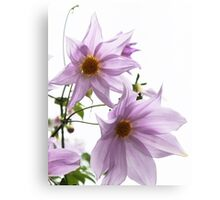 Tree Dahlia Canvas Print