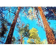 Pine Forest Glory landscape painting Photographic Print