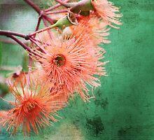 Orange Flowering by Margi
