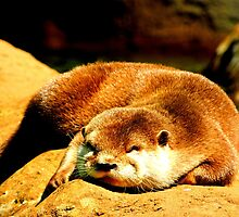 Flat Sleeping Otter by Barnbk02