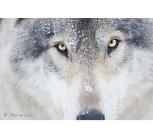 ..trough the eye of a Wolf.. Photographic Print
