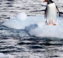 Gentoo penguins (Pygoscelis papua) on Danco Island  Sticker