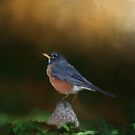 Robin Redbreast by KathleenRinker