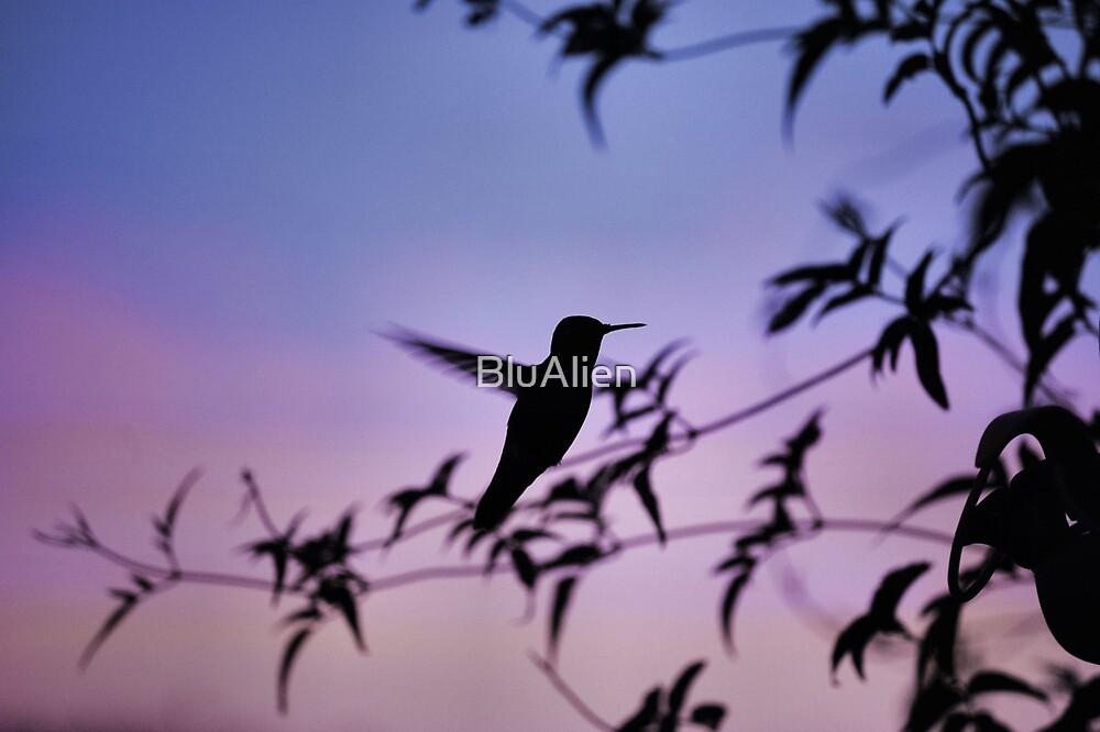 Sunset Hummingbird by BluAlien