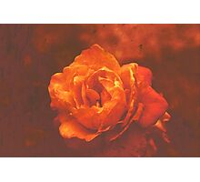Digital Rose  Photographic Print