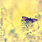 Sunshine and Butterflies by Vicki Field