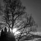 Setting Tree by Cee Neuner