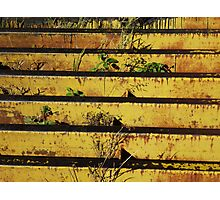 Cattle Grate Photographic Print