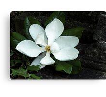 Magnolia, How Sweet Thou Art Canvas Print