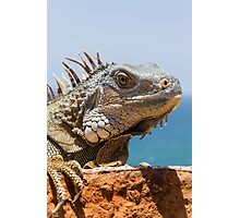 Adult Green Iguana Photographic Print