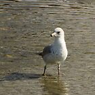 Mouette  by Anne Guimond
