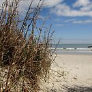 Going to Myrtle Beach... by Anne Guimond