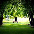 Summer Canopy by Brian Gaynor