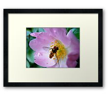 Pink Insect Framed Print
