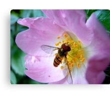 Pink Insect Canvas Print