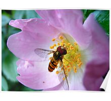 Pink Insect Poster