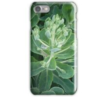 World of Leaves I iPhone Case/Skin