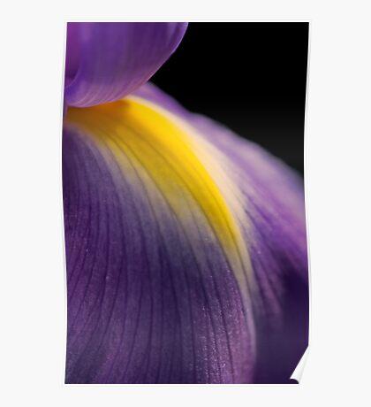 Petal of the Iris Poster