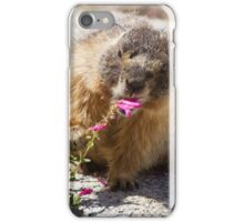 The marmot who inspects flowers iPhone Case/Skin