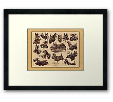 15 scotties Framed Print