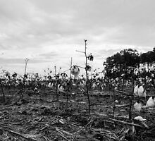 After The Harvest B&W by William Helms