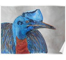 Colourful Cassowary Poster