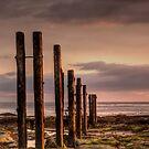 Groynes  by Anna Ridley
