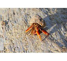 Hermit Crab Photographic Print