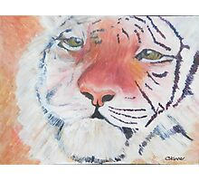 Tiger Tiger Burning Bright Photographic Print