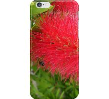 Bee on Red Bottle Brush Bush iPhone Case/Skin