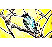 Song bird Photographic Print