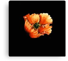 Poppy (Flower) Canvas Print